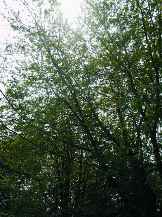Bild Nr. 17861 - 234 mal gesehen